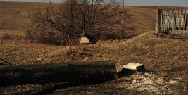 INTERWENCJA: Walka o porosty pod ochroną. Drzewa w Dudyńcach wycięto zgodnie z prawem (ZDJĘCIA)
